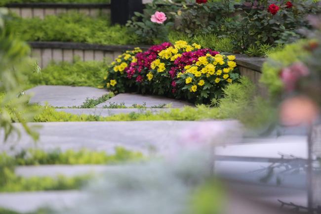 Ghé thăm ban công 30m² rực rỡ sắc hoa có view nhìn ra Hồ Tây của người phụ nữ yêu hoa cháy bỏng - Ảnh 11.