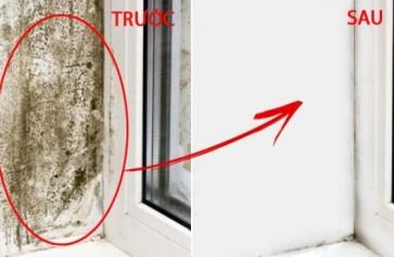 Tẩy bay vi khuẩn gây hại tường bị nấm mốc hiệu quả
